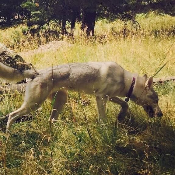 Morrigan (White Elk Morrigan)