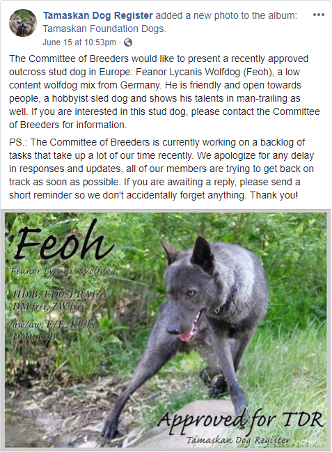 Posted on the Facebook Page of the Tamaskan Dog Register.