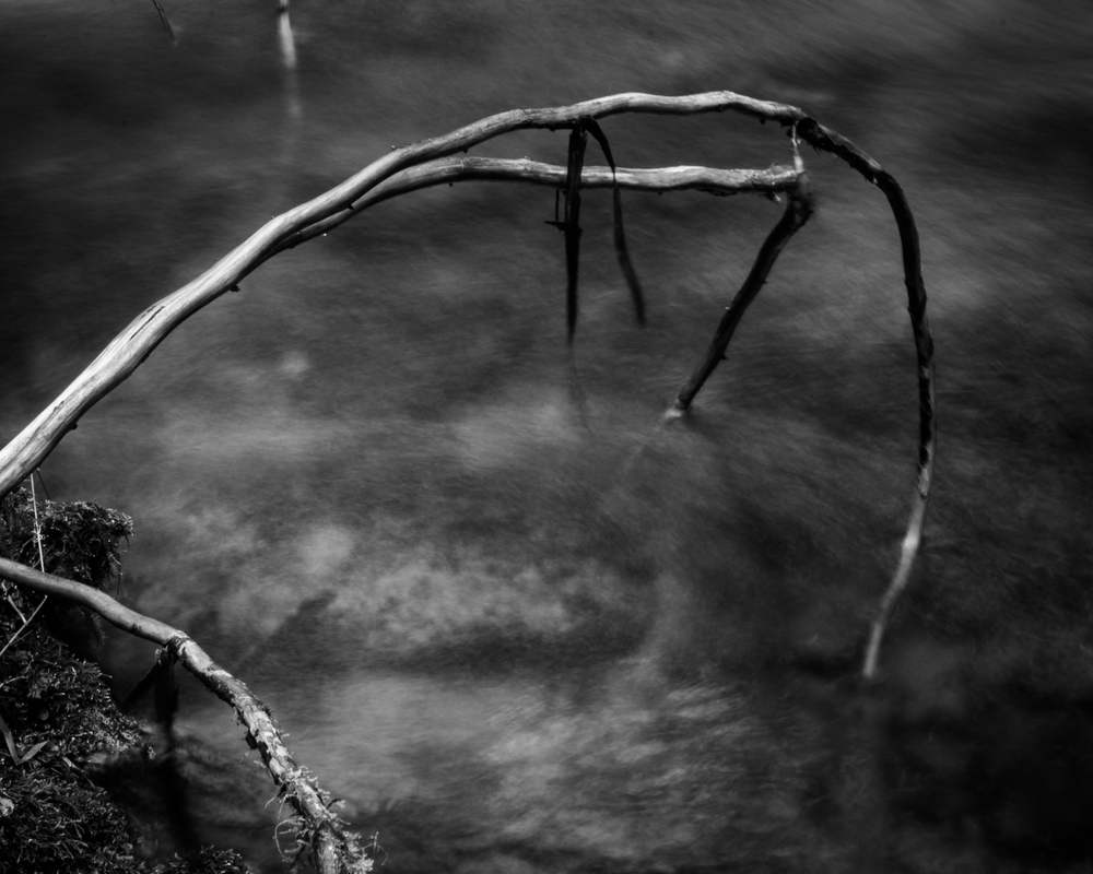 A twig hanging in the creek.