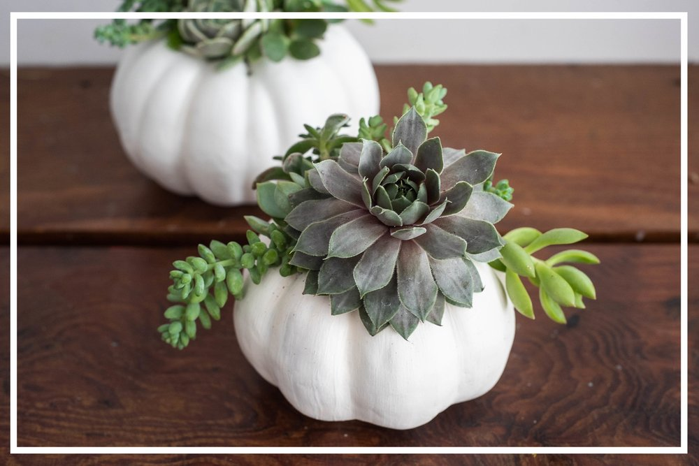 FALL - The leaves are changing, the air is getting crisp, and we have the perfect crafts to give you all the Fall feels!