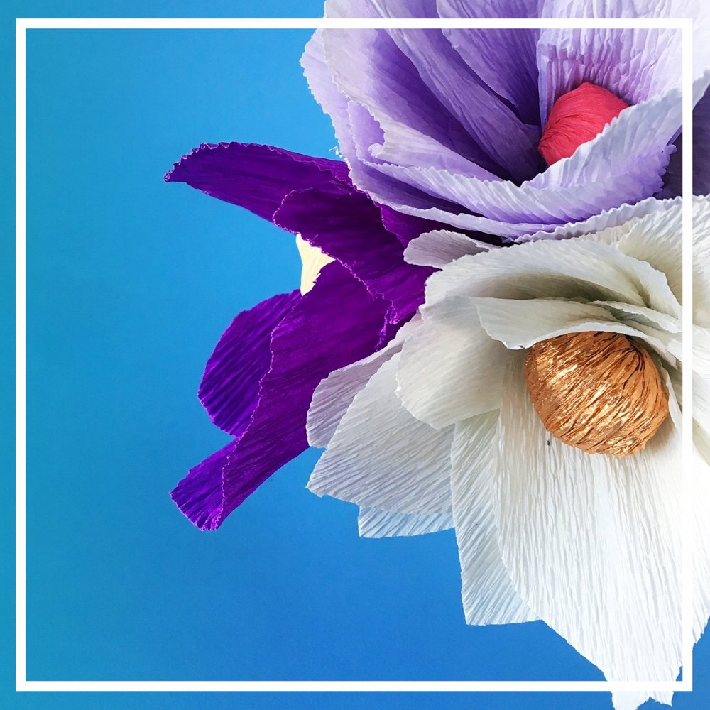 spring_paperflower_2.JPG
