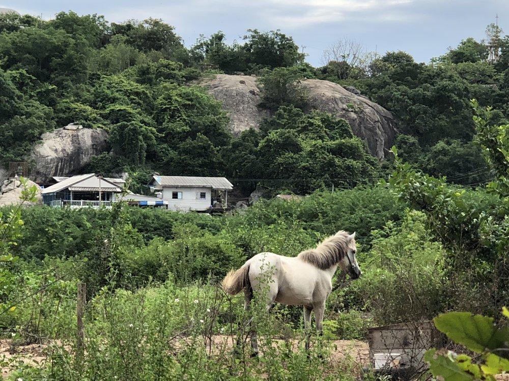 HH 2018-horses in field (1).jpg