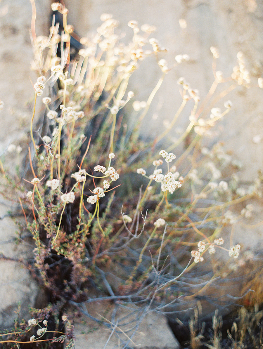 SALLY PINERA_JOSHUA TREE DESERT ENGAGEMENT SESSION-40.jpg