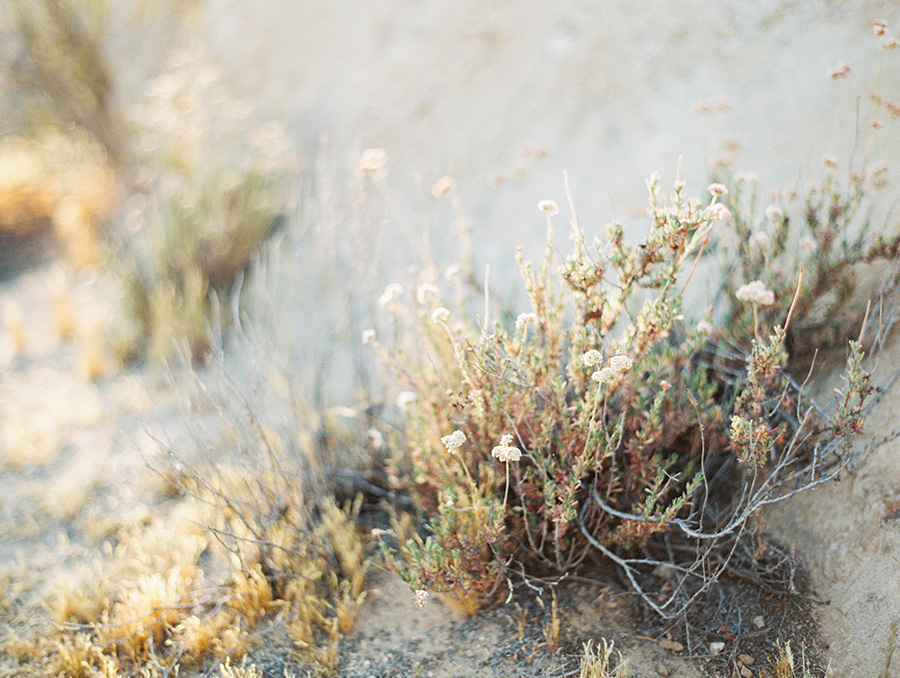 SALLY PINERA_JOSHUA TREE DESERT ENGAGEMENT SESSION-48.jpg