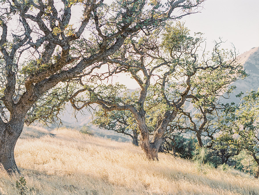 Sally Pinera Photography_Grace and David_Santa Ynez Engagement Session-130.jpg