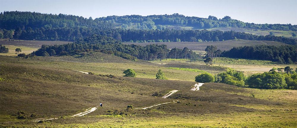 Explore the New Forest on foot