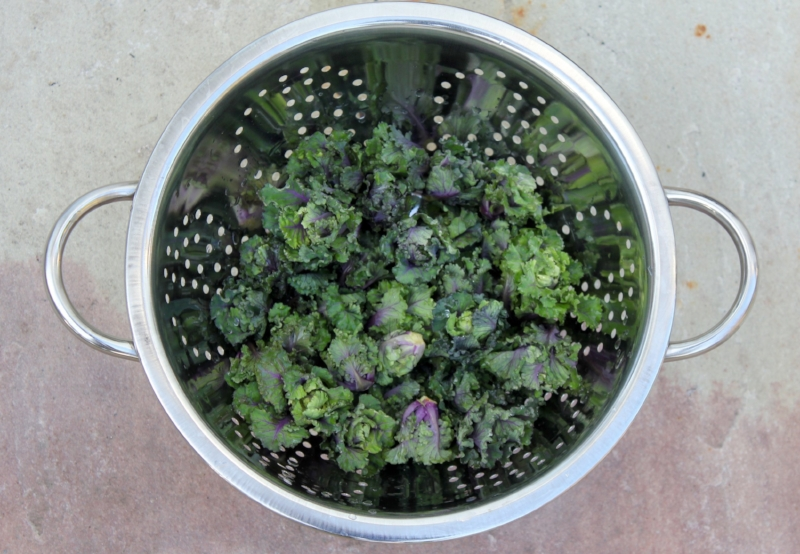 Kalettes in a collander