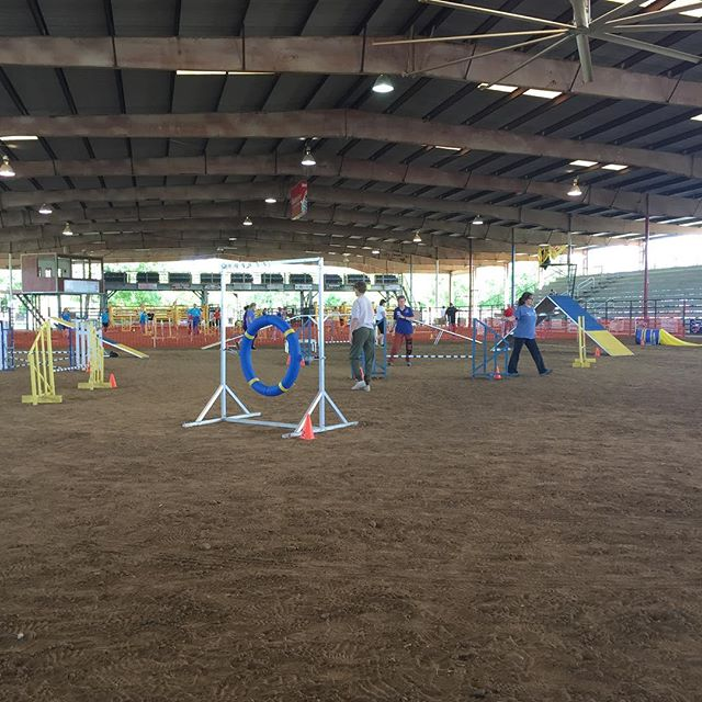 Walkthroughs underway! Join us tomorrow and Sunday beginning at 9:00 a.m. for our annual All-Breed Agility Trial. #tgcvizslaclub #vizsla #vizslaagility