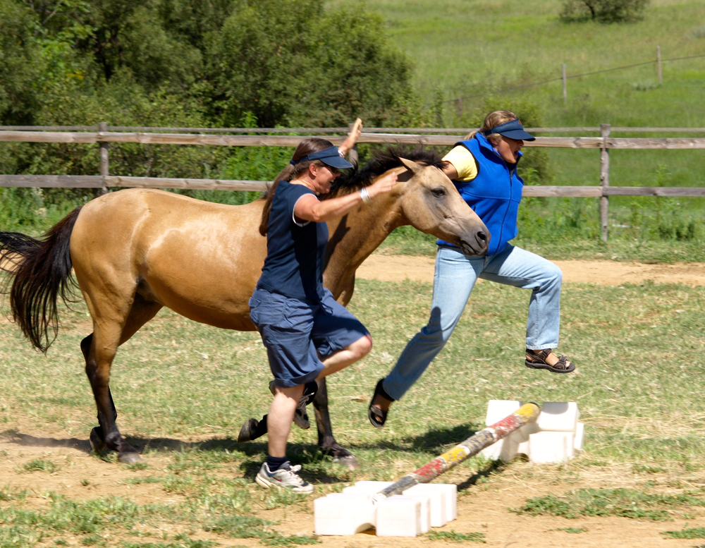 Leap with horse (Betsy).jpg