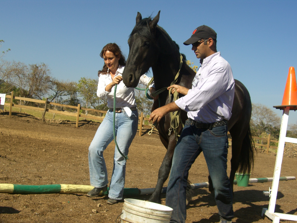 Horse, couple.jpg