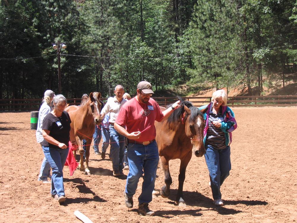 Horse, group .jpg
