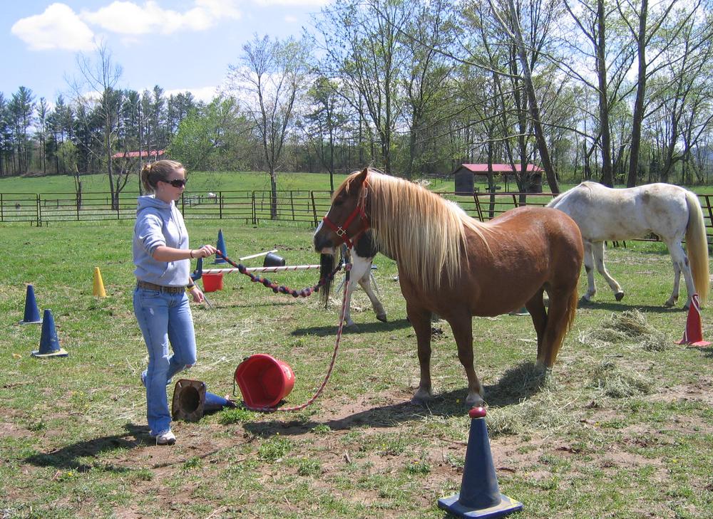 Horse, teenager.jpg