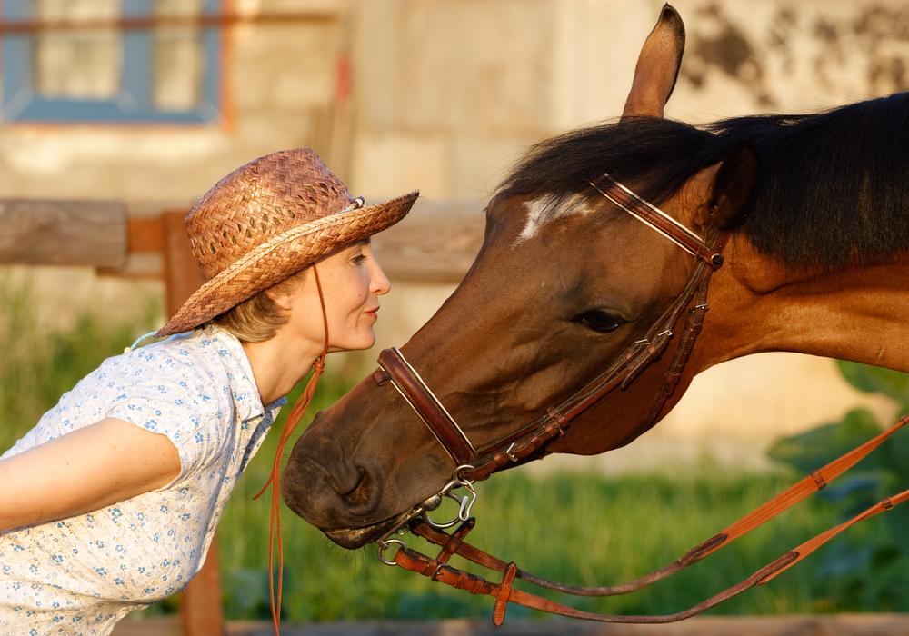 horse, connect.jpg