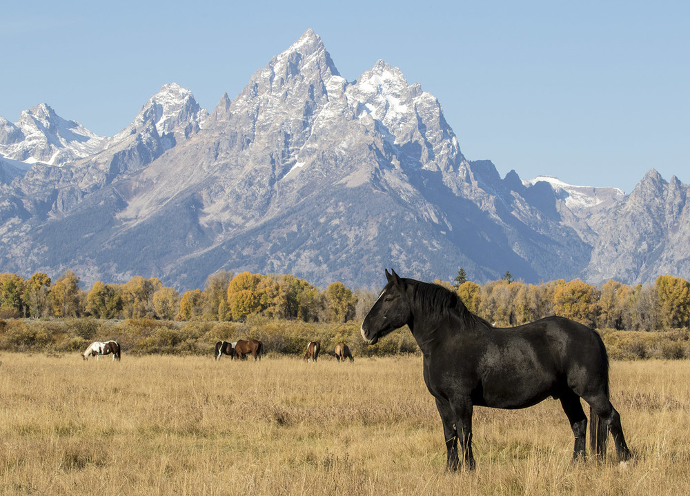 Grazing at Grand Teton Mountain