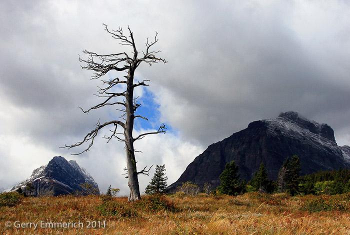 Many_Glaciers_Tree_2.jpg