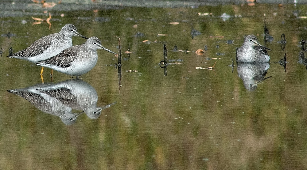 yellowlegs 3 fall reflections.JPG