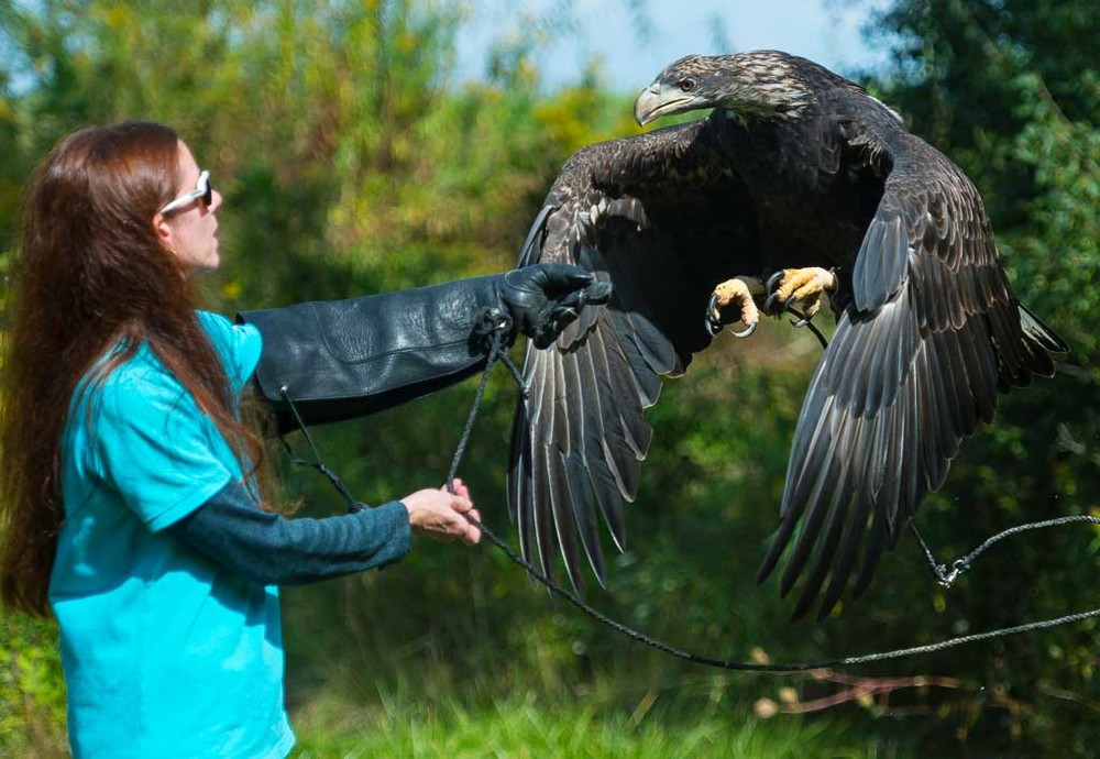 Eagle Training.jpg