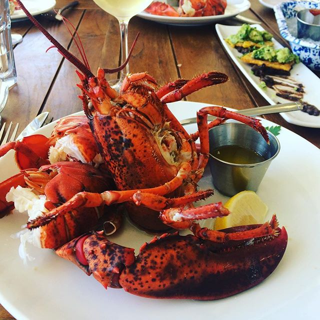 Benefits of #tour #foodies #lobstet #thanksforyourbody #critters #folklife #california