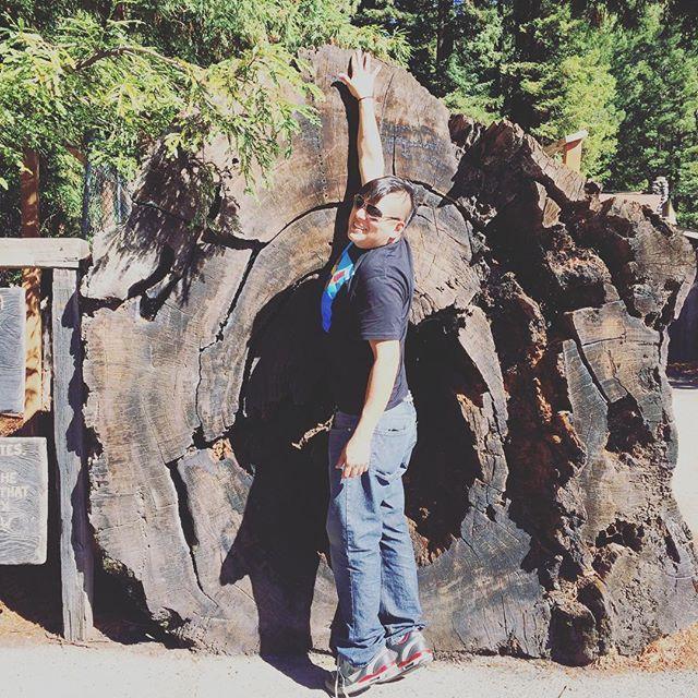 #redwoods #trees #love #treehugger #tour #folklife