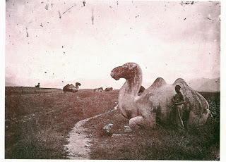 John Thomson. Stone Animals, Ming Tombs. c. 1871-72. National Library of Scotland.