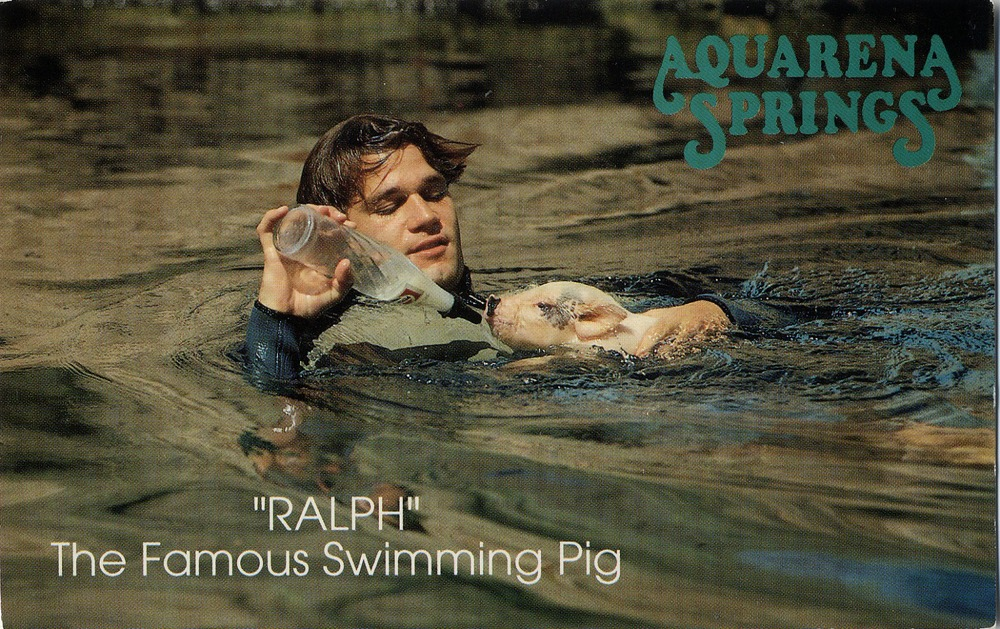 Cheap family joke. My father's a Ralph. He likes to swim. He likes to eat. Oh, how we laughed.