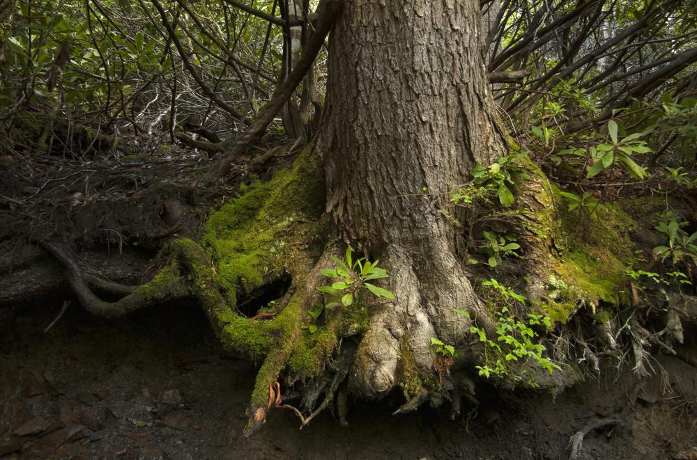 TREE-ROOT.jpg