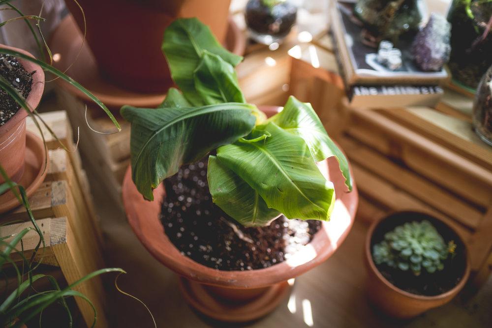 plantblog-2.jpg