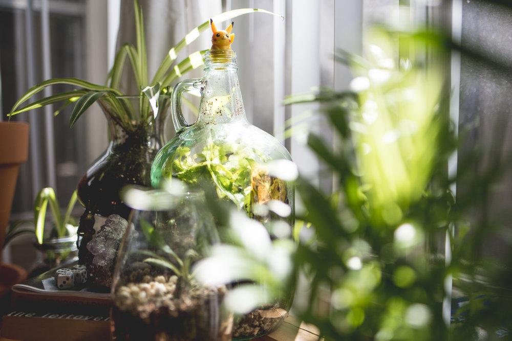 plantblog-3.jpg
