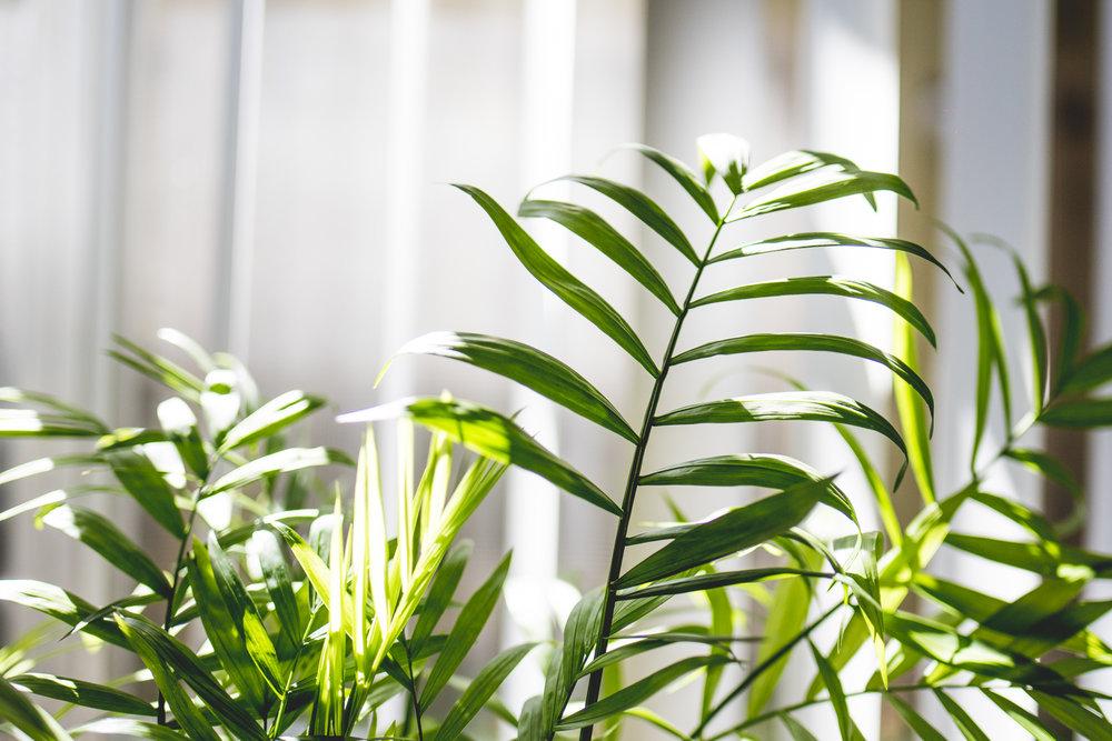 plantblog-4.jpg