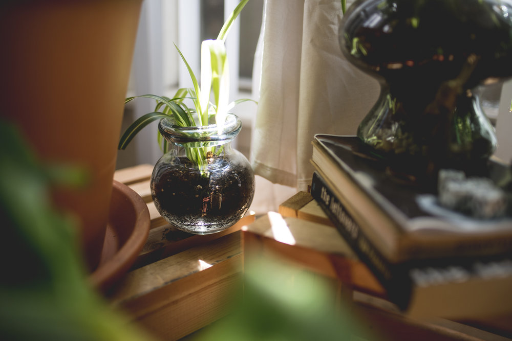 plantblog-9.jpg
