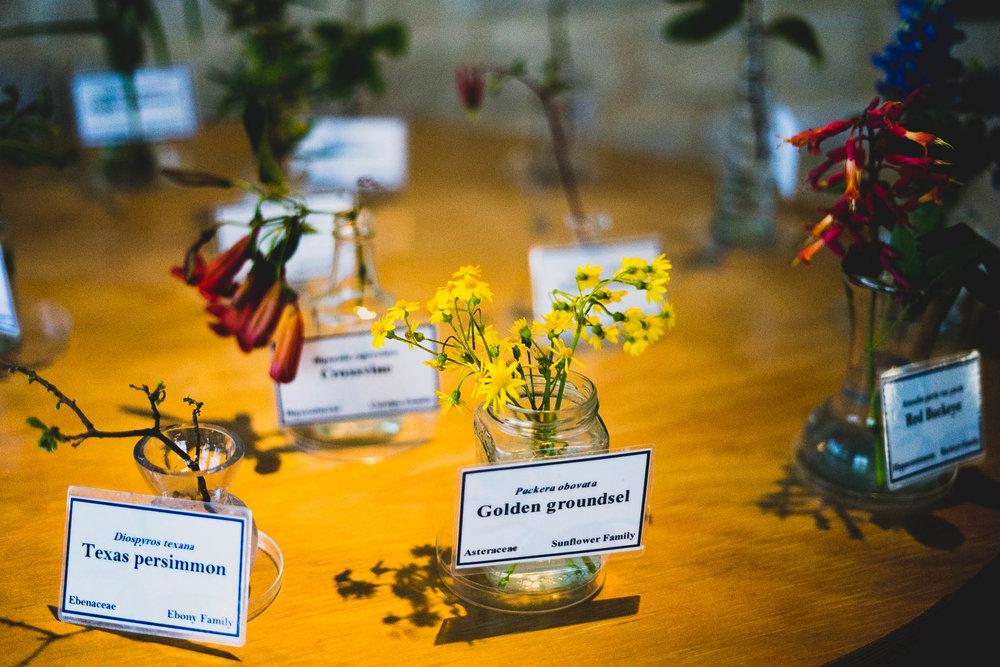 ladybirdcenter-11.jpg
