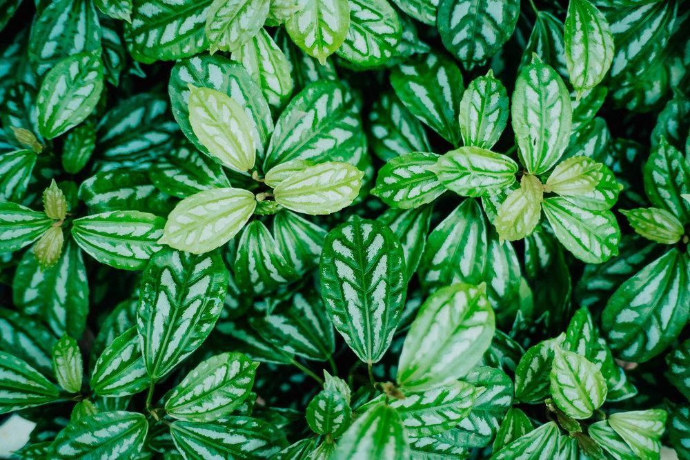 plants-11.jpg