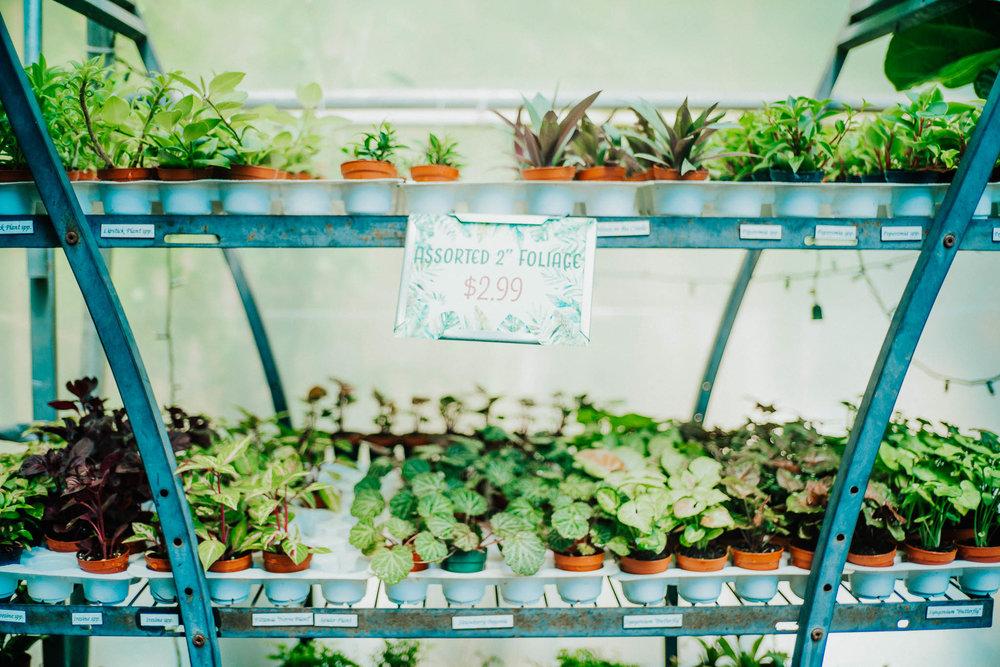 plants-13.jpg