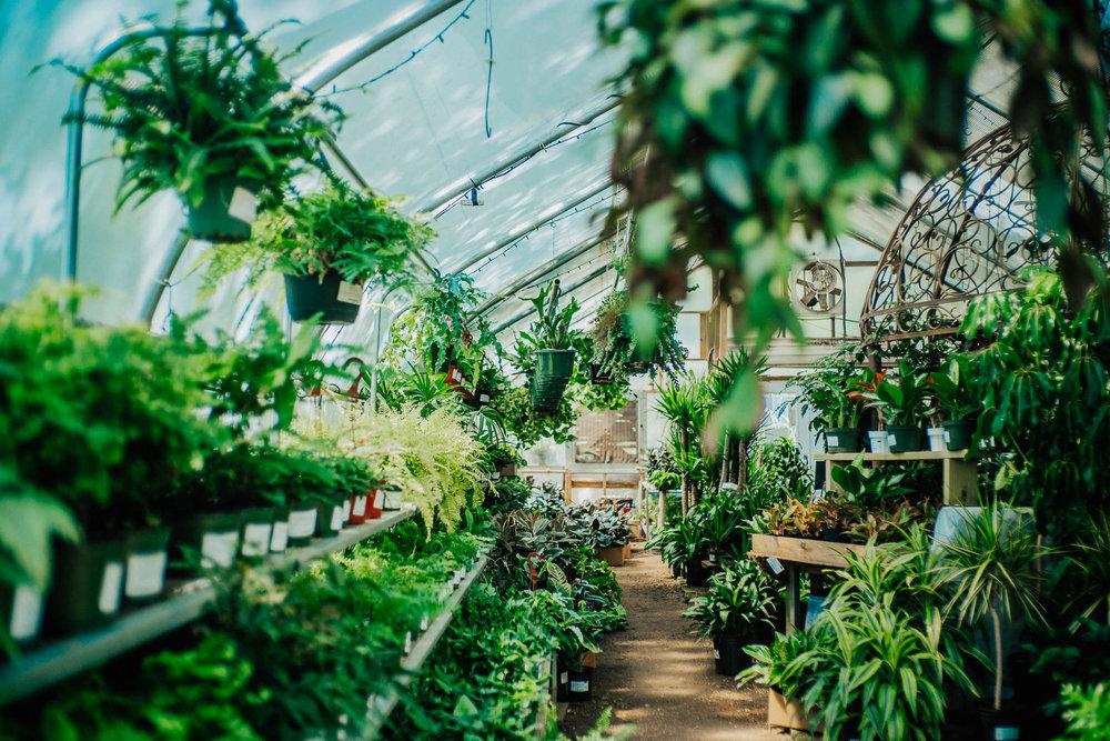 plants-15.jpg