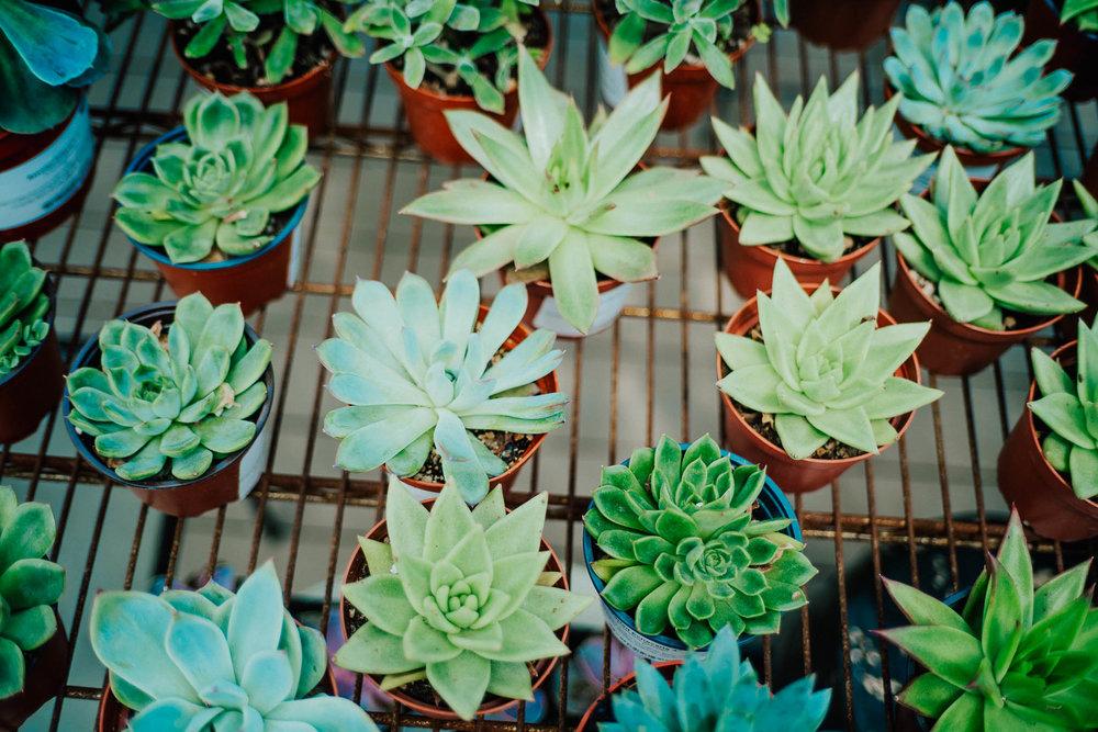 plants-20.jpg