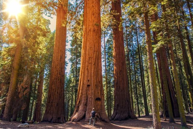 Sequoia-640x427.jpg