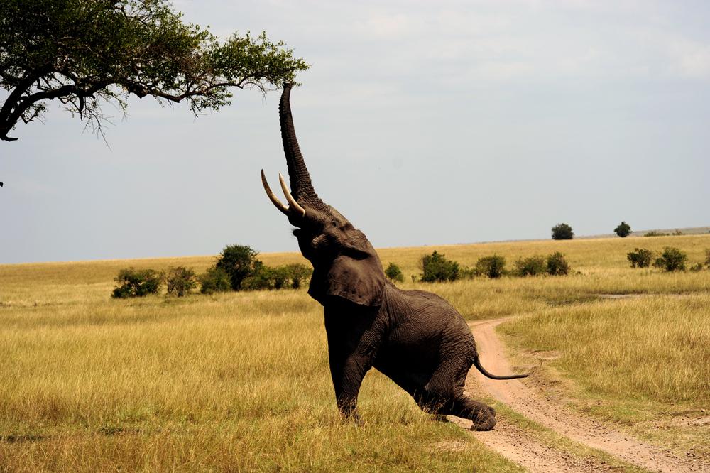 Kenya.jpg