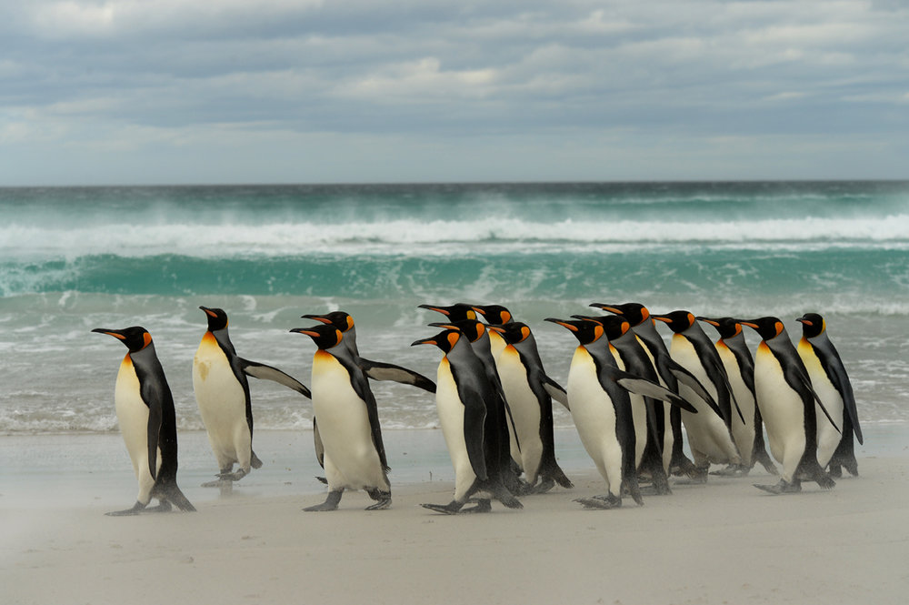 FALKLAND ISLANDS // NOV 6– 16, 2014