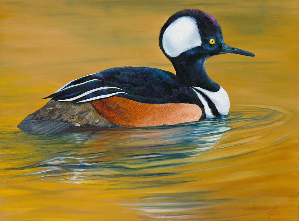 """""""Merganser on Water...After the Dance"""""""