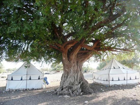 a-camp-under-the-oldest.jpg