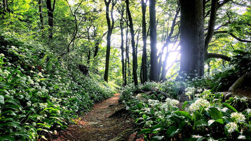 cornish-cornwall-forest-wood-track-path