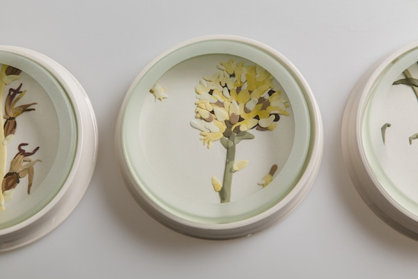 Herbarium Dish - Rutidosis copy.jpg