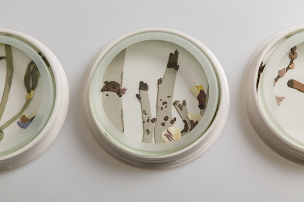Herbarium Dishes - Bossiaea copy.jpg