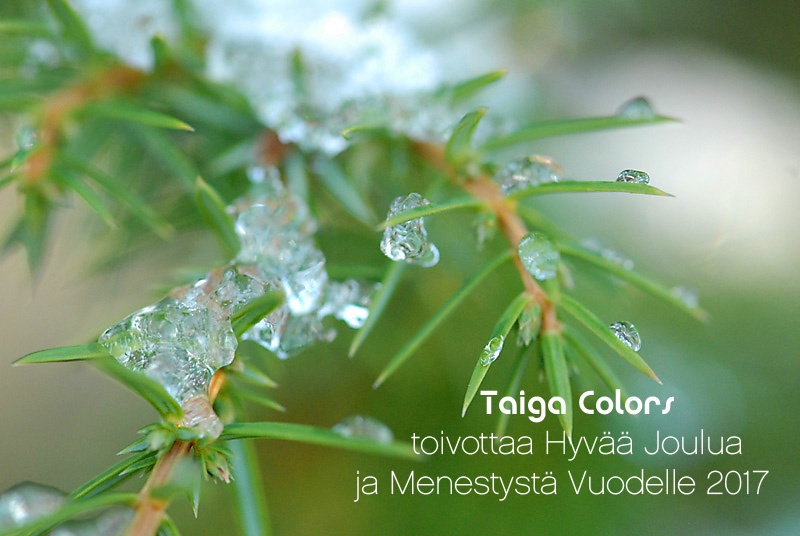 Taiga Colors on avoinna joulunalusviikolla ma-t0 10-19 ja aatonaattona perjantaina 10-18.  Tervetuloa! Taiga Colors lomailee 24.12.2016-1.1.2017.  Tervetuloa jälleen 2.1.2017 ♥   Taiga Colors opening hours on week 51: 20-22th Dec 10 AM to 7 PM, 23rd Dec 10 AM to 6 PM. Welcome! Taiga Colors will be closed between 24th of Dec and the 1st of January. Welcome again the 2nd of January