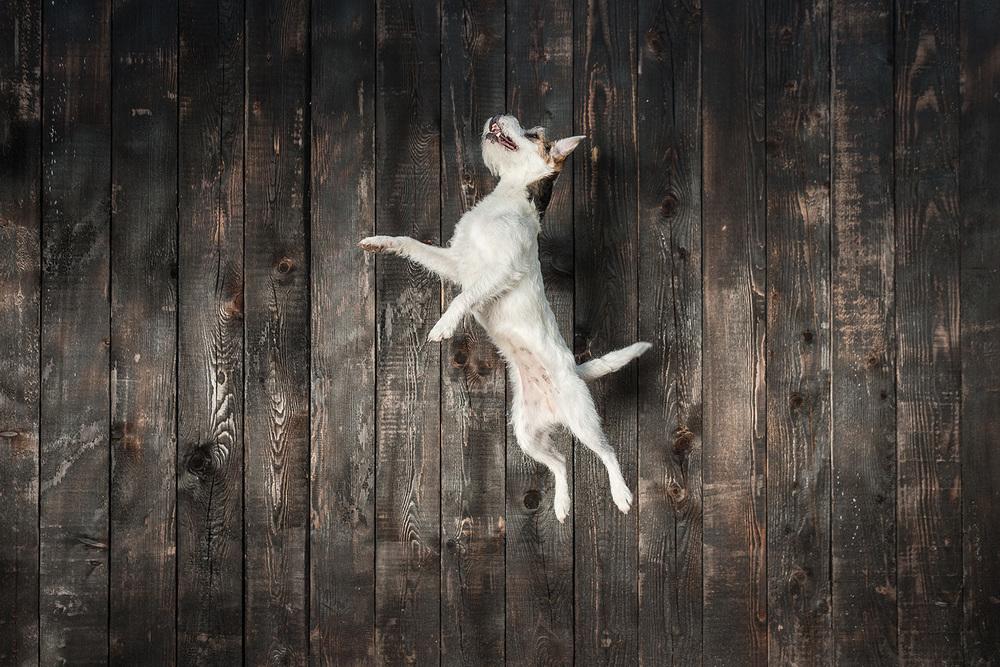 O NAS Karmen in Mia Zahariaš že dve desetletji aktivno delujeva v kinologiji in neprekinjeno vodiva tečaje vzgoje in šolanja psov, v zadnjih letih pa se ukvarjava še z izborom in treningom psov za nastope na reklamah, prireditvah, televiziji in filmu. Več →