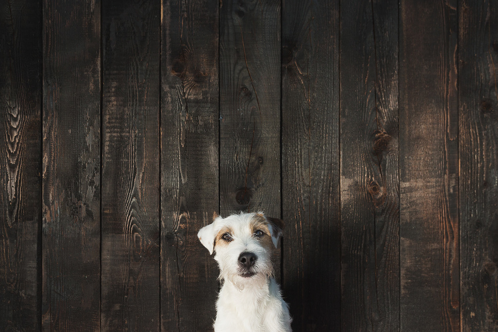 TEČAJI V Šoli za družinske pse PRIDEN.SI prirejamo začetne tečaje za mlade pse in nadaljevalne tečaje za odrasle pse. Več→