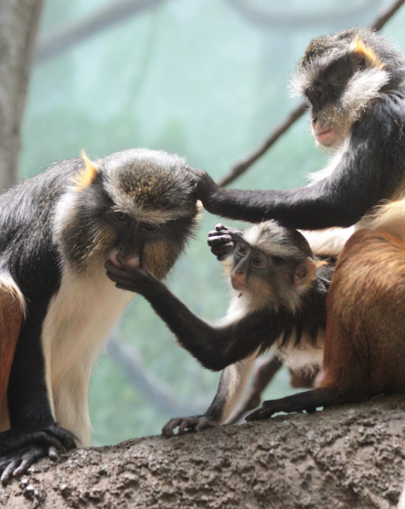 """2nd place: @GinaFontes """"We're all the same, really."""" African Wolf's Monkeys"""
