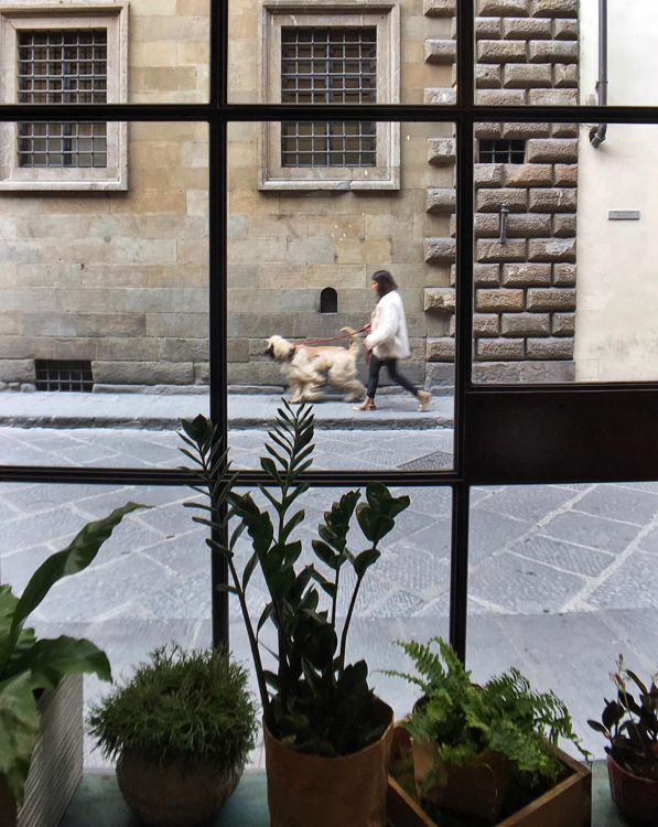 I took this in a cafe near the Galleria dell'Accademia in Florence.  I always gravitate toward dogs and while composing this window shot I saw this majestic Afghan Hound approaching and knew it'd make a terrific strideby.