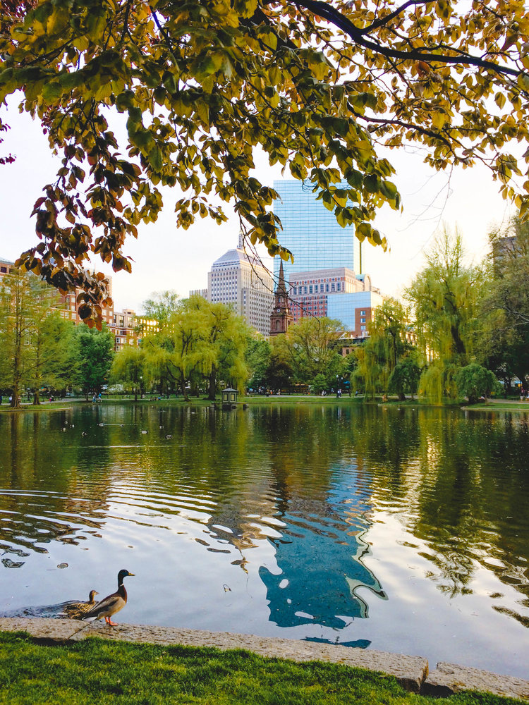 Top reasons to visit Boston and things to see Public Garden Common Pond