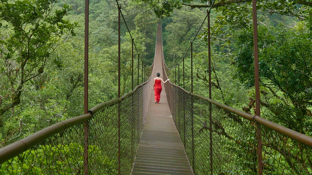 Boquete Tree Trek Hanging Bridge Panama